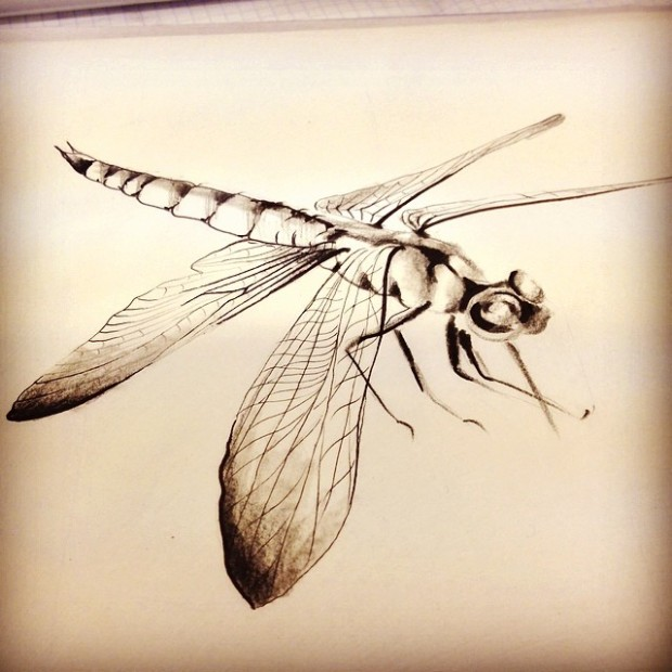 Dragonflies are known as snake doctors because they can bring dead snakes back to life.